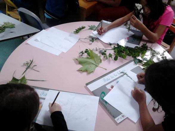 Francas-Atelier dessin d'herboriste avec Nadia Lubak