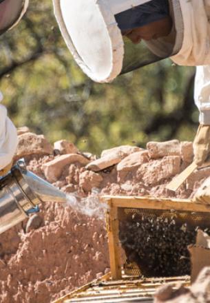 récolte du miel au Maroc