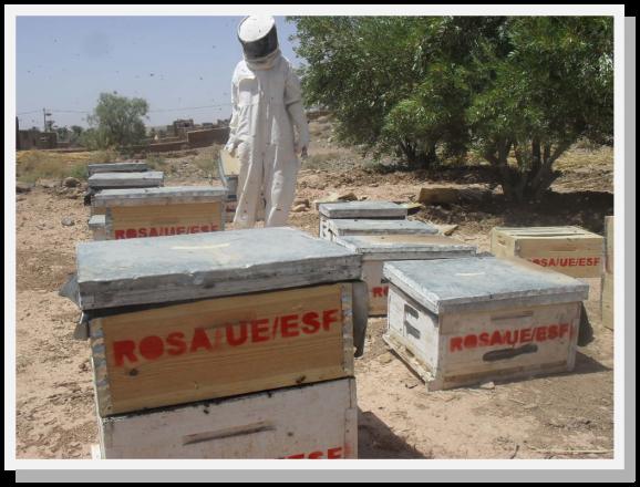 installation des ruches