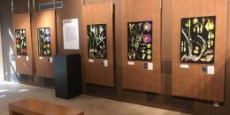 La saga des plantes libres (Muséum VAR)